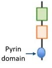 Pyrin protein small