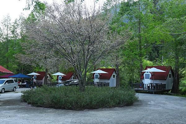 合歡山 武陵農場