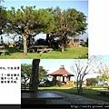 26-櫻花林庭院