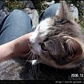12-貓-小灰