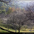 36-梅樹林