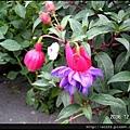 65-立鶴花(1)