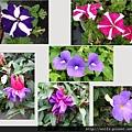 67-花卉