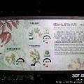 21-變葉植物