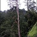 27-奇木