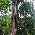 28-三號巨木(1)