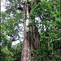 29-三號巨木(2)