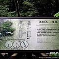 31-通脫木(蓪草)
