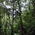 30-三號巨木(3)