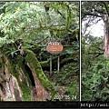 32-四號巨木(1)