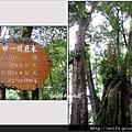 42-廿一號巨木(1)