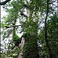 48-十三號巨木