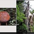 60-八號巨木(鼎立相成)