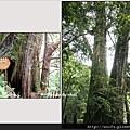 65-五號巨木(狗熊之窩-1)
