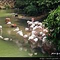 13-紅鸛池