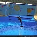 27-海豚秀