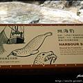 49-斑海豹