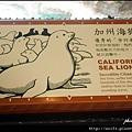 51-加州海獅