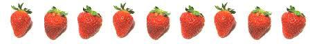 草莓分隔線