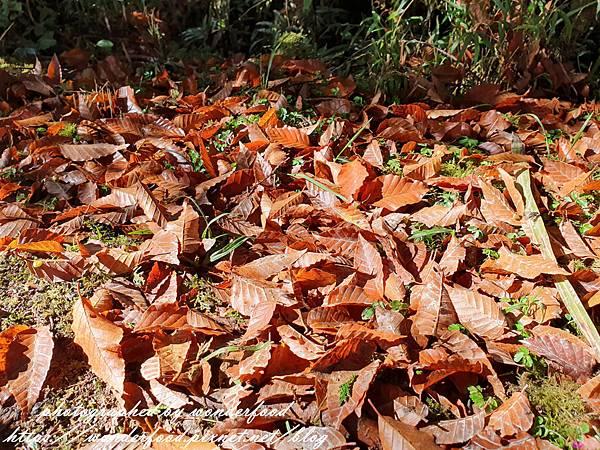 PhotoCap_198.jpg
