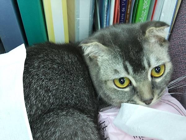 091119_妹妹眼睛好黃透.JPG