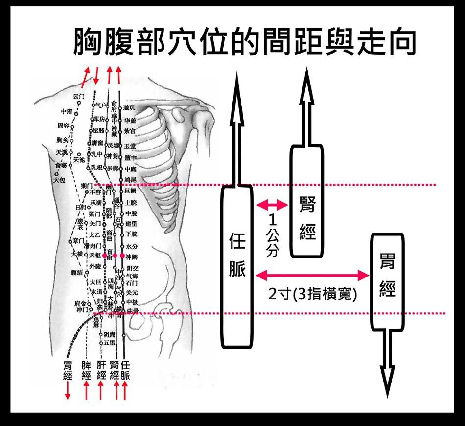 胸腹部穴位.jpg