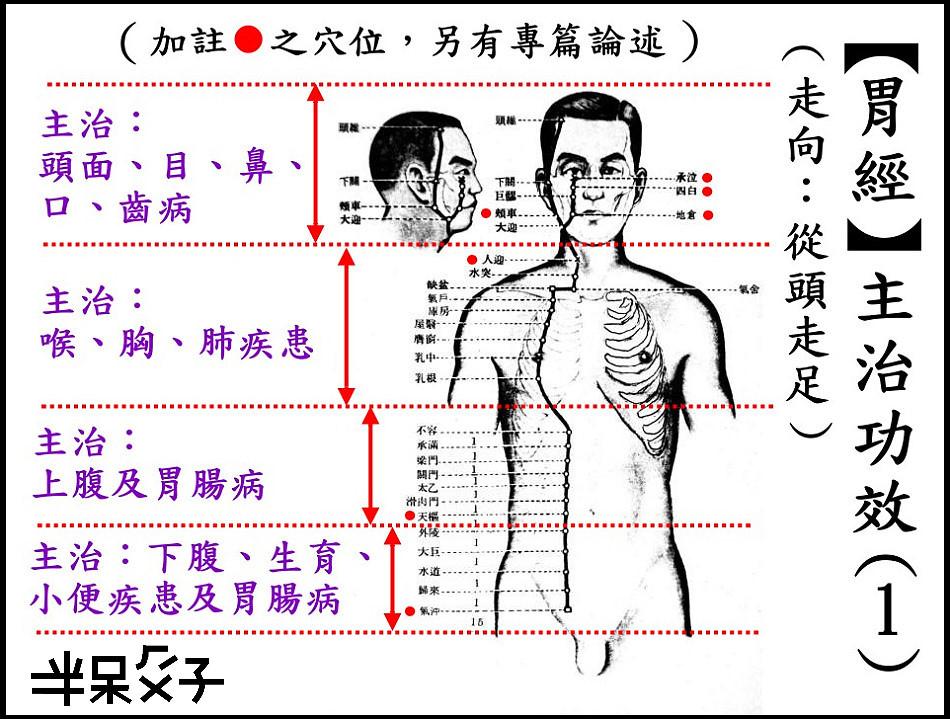 ●3-1胃經-1.jpg