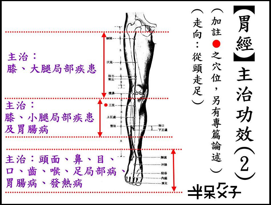 ●3-2胃經-2.jpg