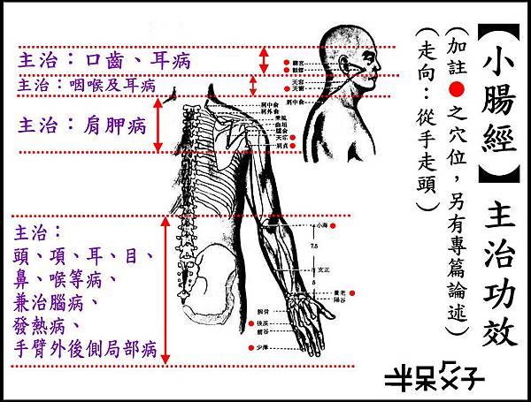 ●6小腸經.jpg