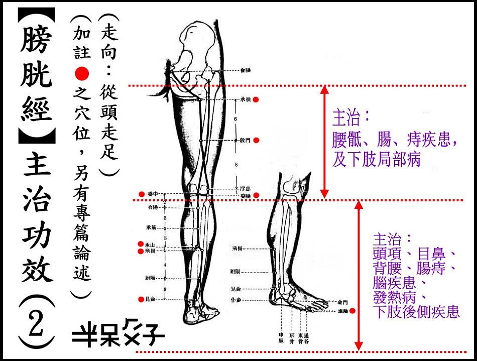 ●7-2膀胱經-2.jpg