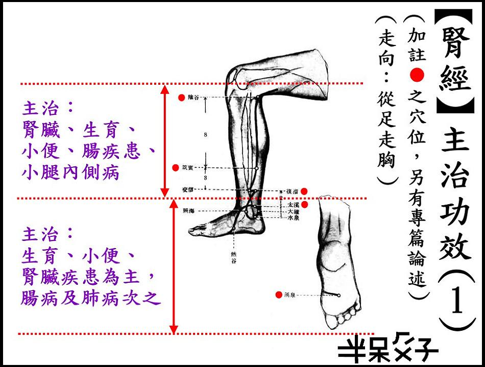 ●8-1腎經-1.jpg