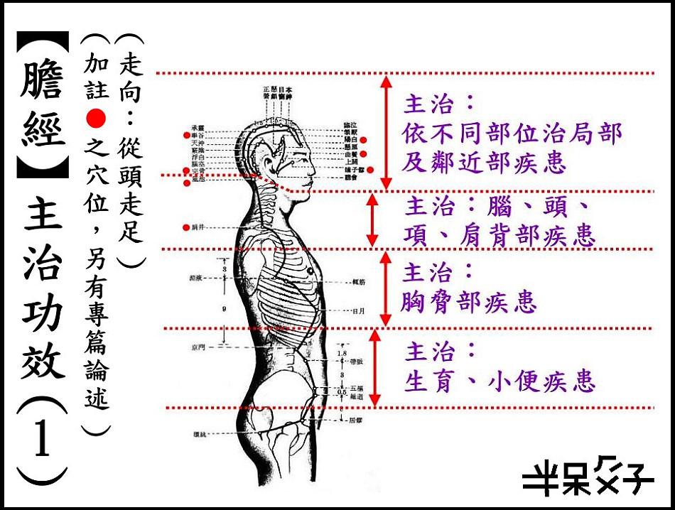 ●11-1膽經-1.jpg