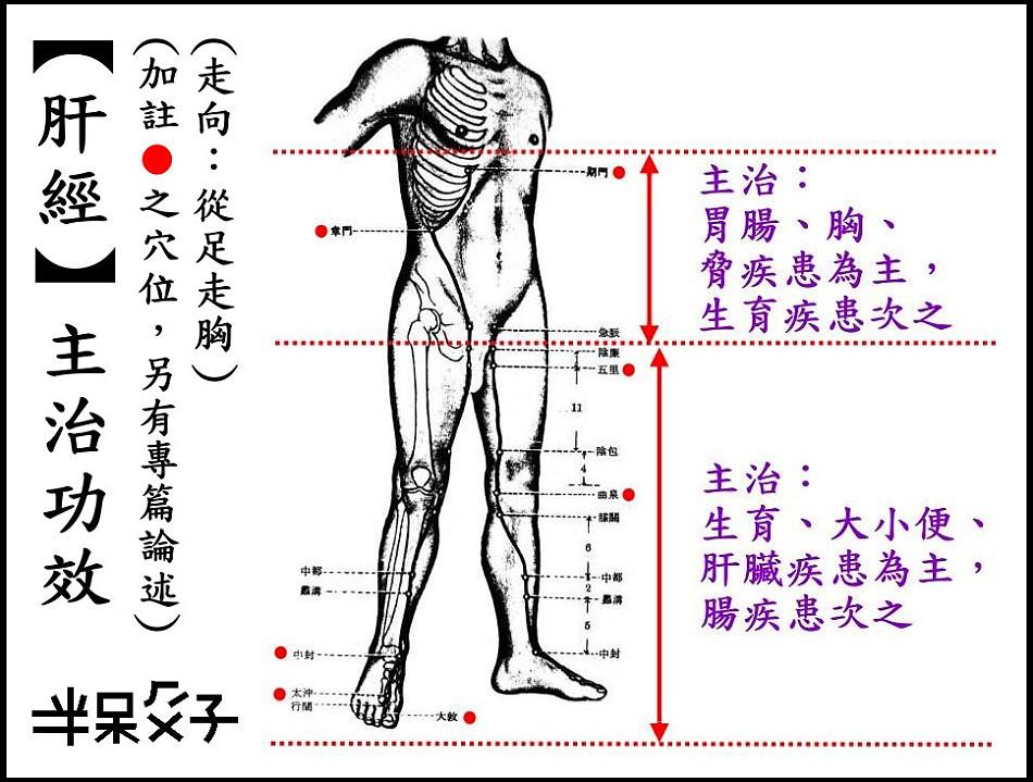 ●12肝經.jpg