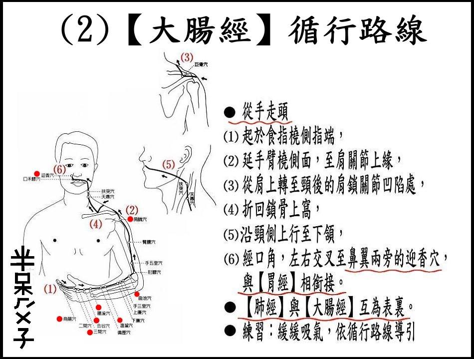 ●(2)大腸經.jpg