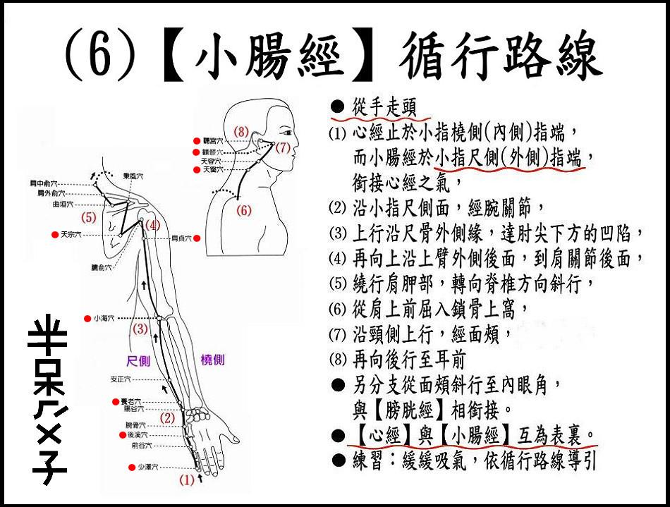 ●(6)小腸經.jpg