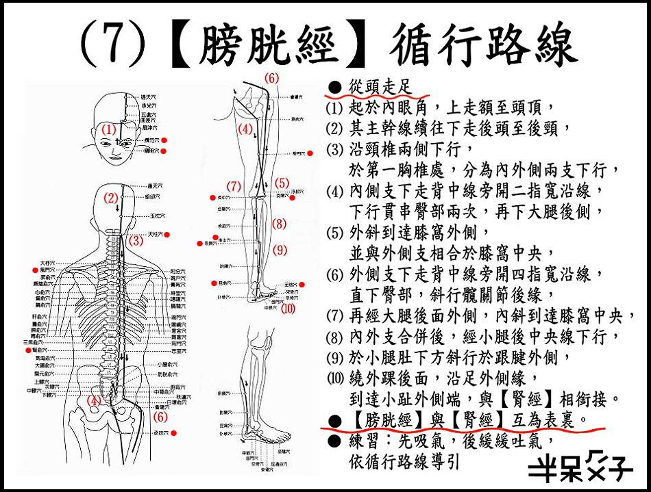 ●(7)膀胱經.jpg