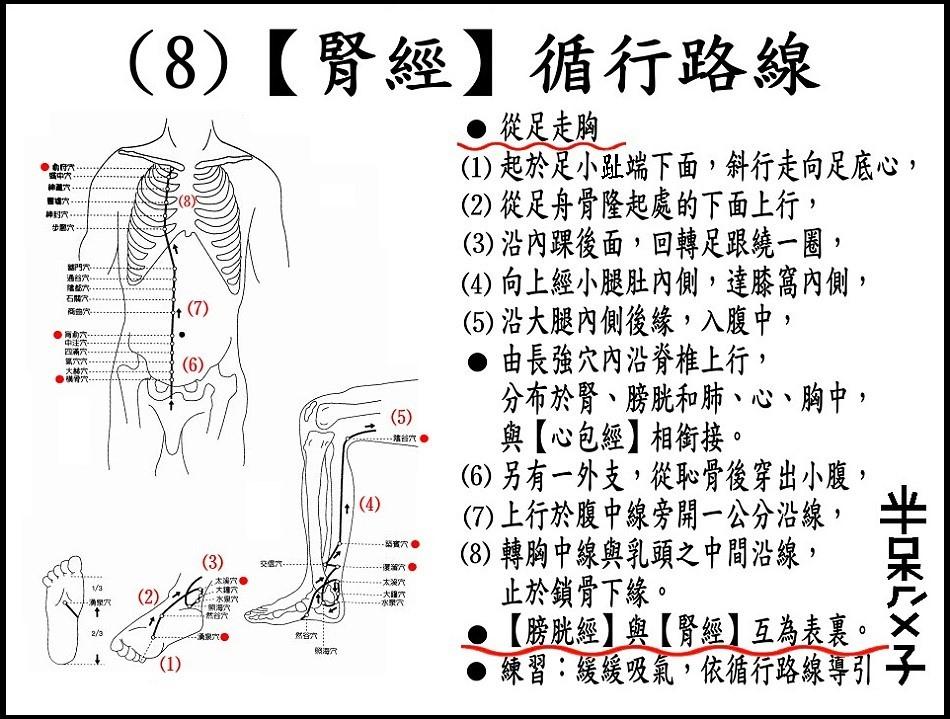 ●(8)腎經.JPG