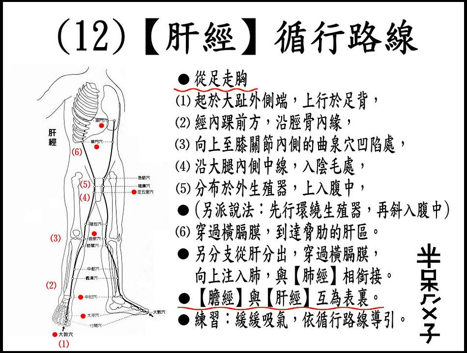 ●(12)肝經.jpg
