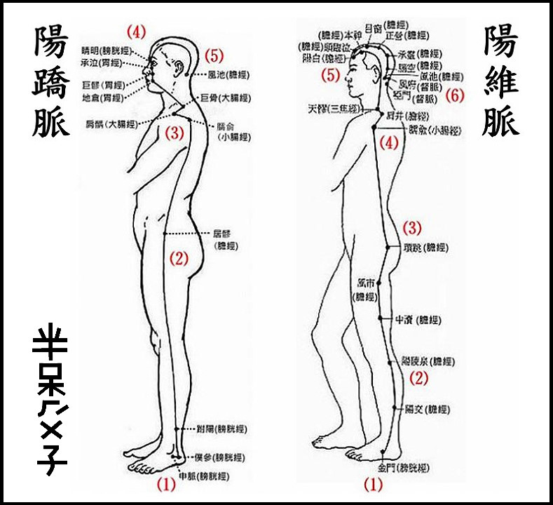 ●9(陽蹻+陽維).jpg