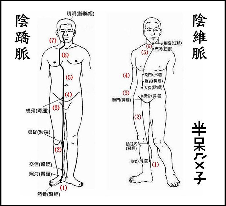 ●10(陰蹻+陰維).jpg