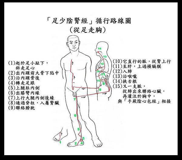 ●第10式-1【腎經】循行路線圖.JPG