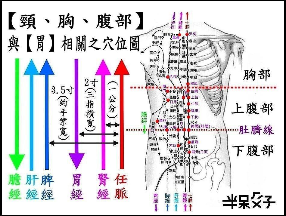 ●1頸胸腹部.jpg