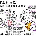 ●3手掌反射區.jpg