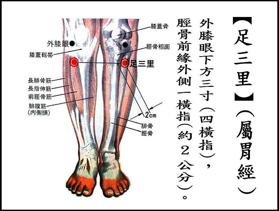●E8足三里-1(胃經).jpg