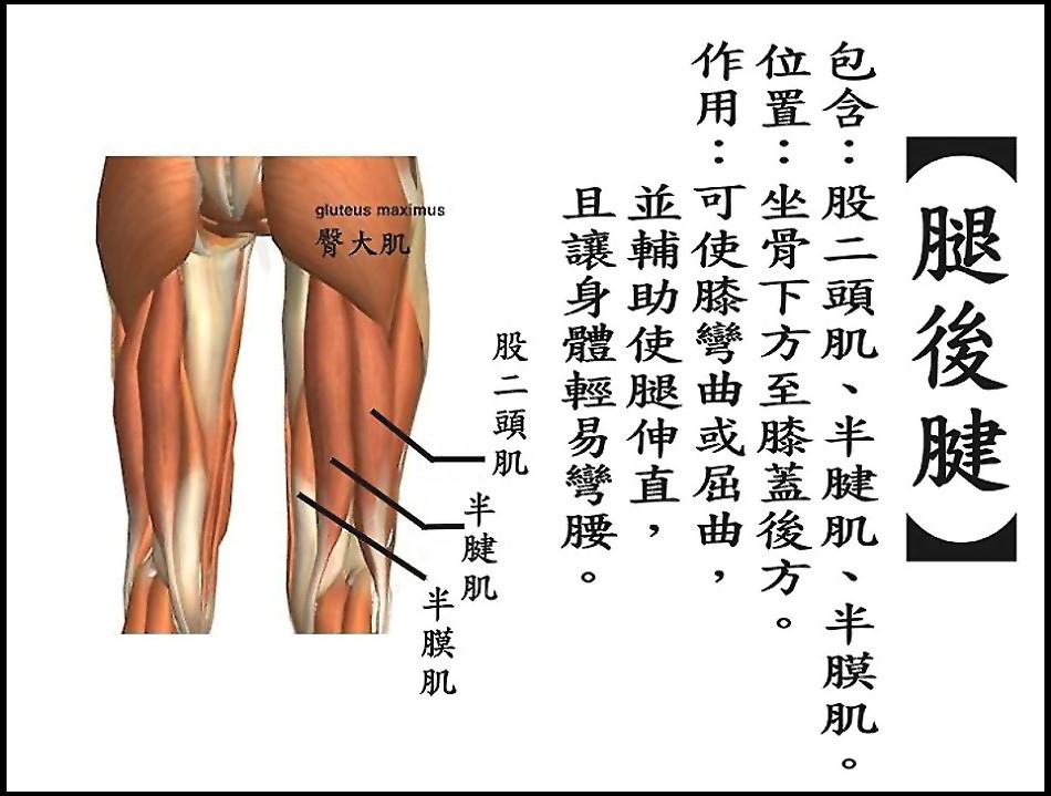 ●腿後腱.jpg