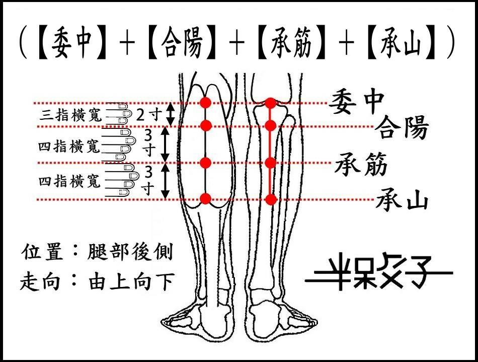 (委中~承山)-2.jpg
