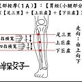足部(1A)(小腿).jpg