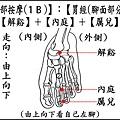 足部(1B)(腳面).jpg