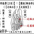 足部(2B)(腳面).JPG