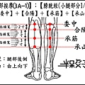 足部(3A-1)(小腿-1).jpg